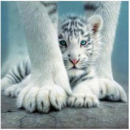 Small Tiger.jpg