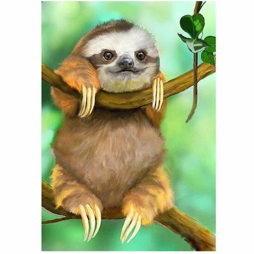 Cute Sloth.jpg